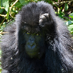 Gorilla Trekking expeditions