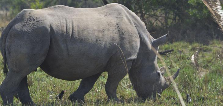 1 day Ziwa Rhino