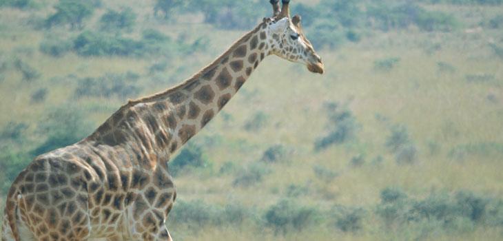14 days explore Uganda