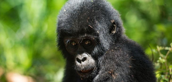 14 days Uganda Rwanda