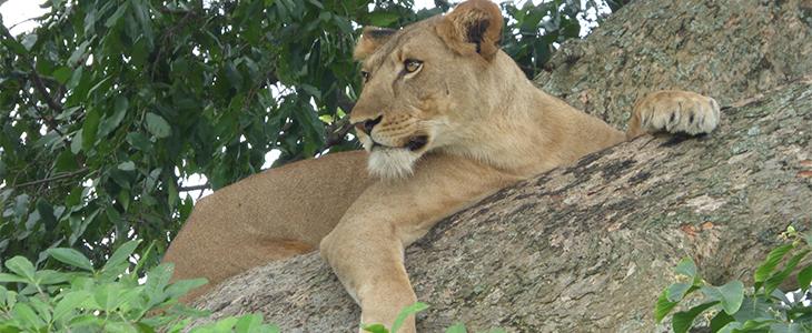 Queen Elizabeth Safari