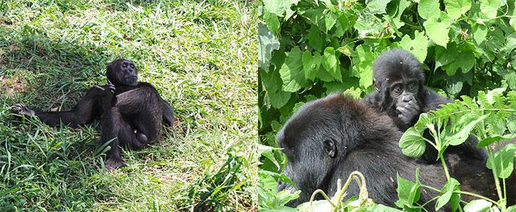 Rwanda Primates
