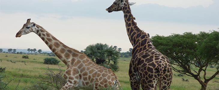 Explore Uganda Rwanda