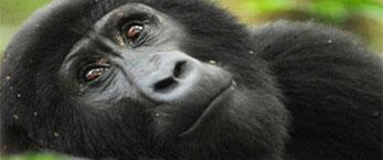 Rwanda-tours