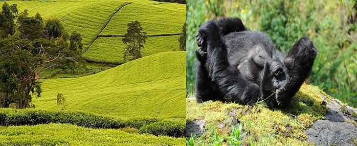 14 days Adventure Rwanda