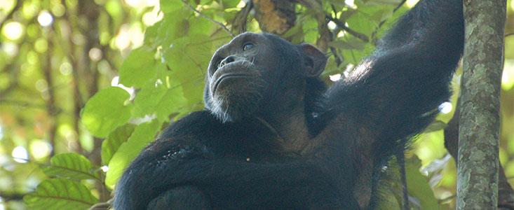 Discover Rwanda