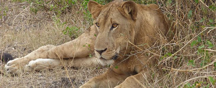 13 days Uganda Safari