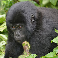 Uganda-Rwanda Combine