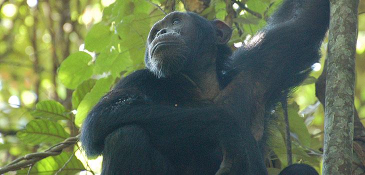 Primates recap