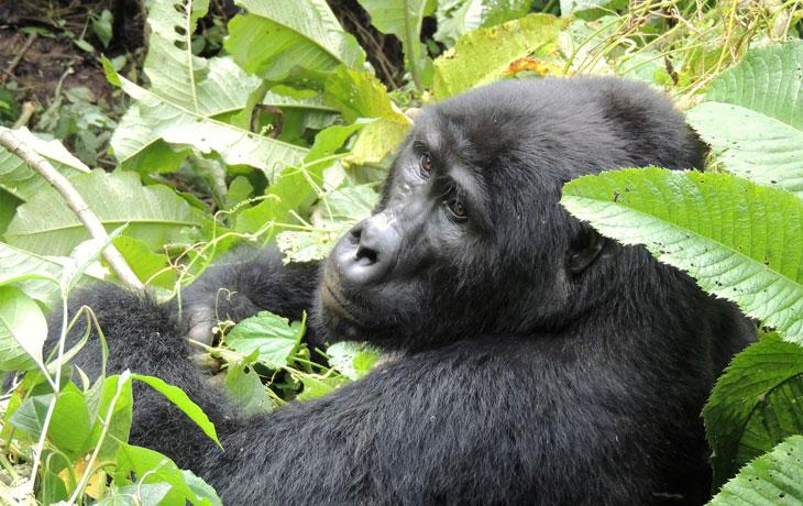 6 days Primates