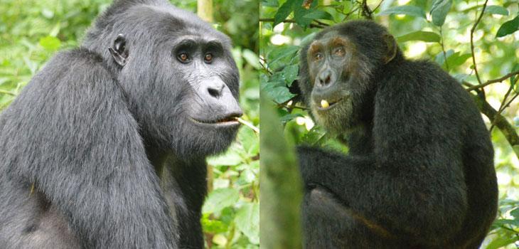 21 days Uganda Rwanda