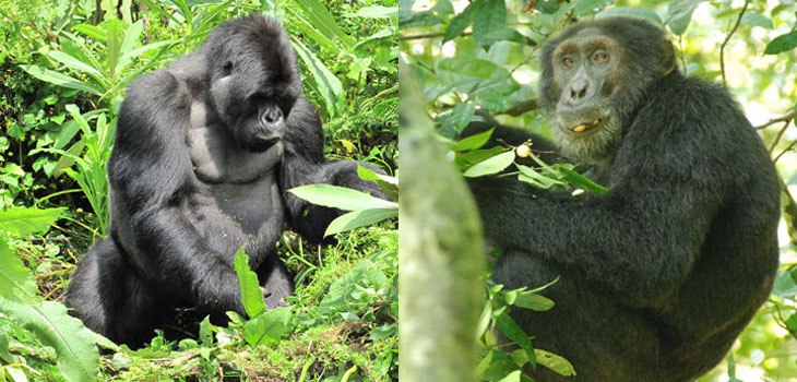 6 days Primates Safaris