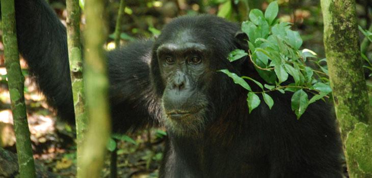 8 days Uganda Safaris