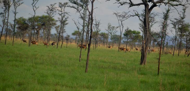 Uganda Safaris National Parks
