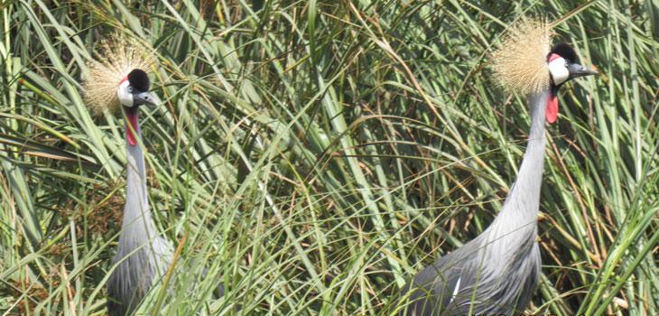 15 days birding Uganda