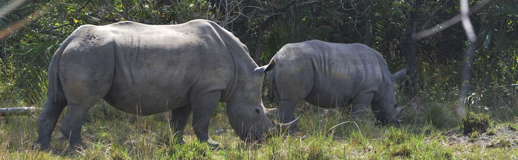 Ziwa Rhino Tracking Uganda