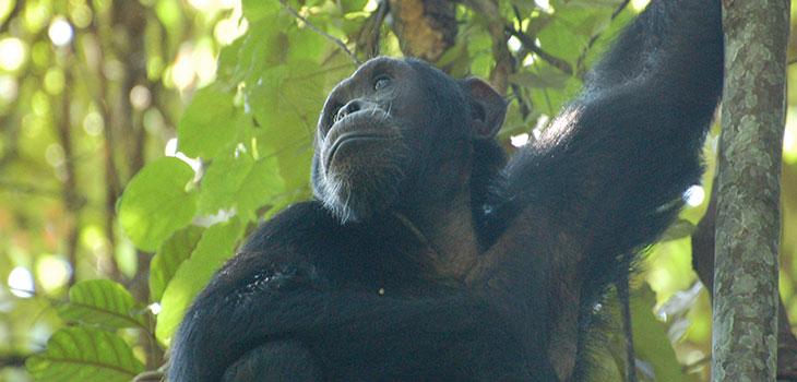 12 Days Discover Rwanda